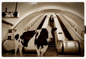 The cow of the subway by Bkl