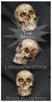 Steve the Skull Pack by lindowyn-stock