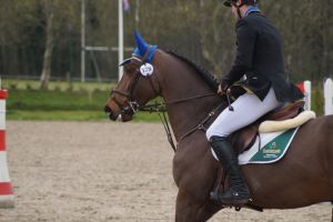 Bay Horse - Show Jumping Stock 9.5 by MagicLecktra