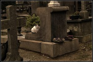 Cemetery's cat II by kakobrutus