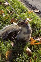 Squirrel on Leash by woobiee