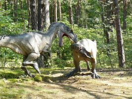 ceratosaurs by omg-stock