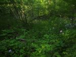 Forest and Wildflowers 1 by AllStock