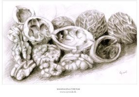 nuts by Magdusia
