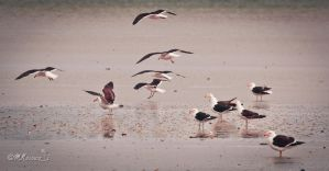 landing, take off and flying by mnoruzi