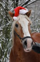 Christmas Horses II by webworm