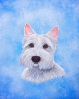 West highland terrier by simonbearedwards