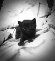 Baby cat by beth16