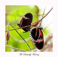 Butterfly 1 by calimer00