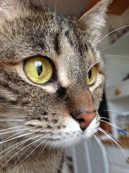 Kitten Eyes by That-Photographer