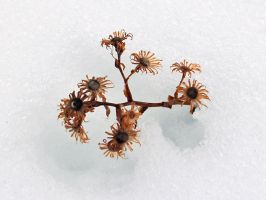 Cold Flower by chribob