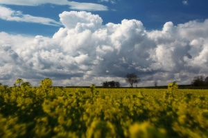 Countryside by scotto