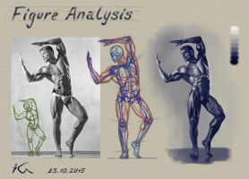 Anatomy study6 by Olekir