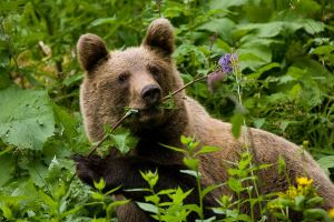 Bear by JMrocek