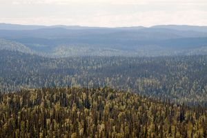 Gradient of taiga by khmaria