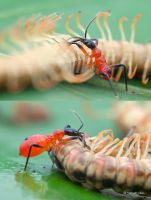 A big meal by melvynyeo
