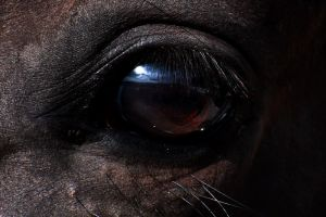 Horse Eye by CamStatic