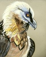 Bearded Vulture 2 by HouseofChabrier