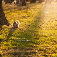 Squirrel in the sunlight by CarpeSav