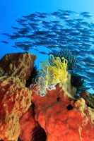 School of fishes by MotHaiBaPhoto