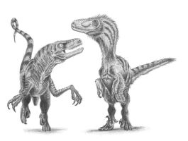 Old raptor vs New raptor by camiloandres