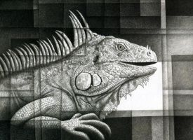 Iguana Profile Study by nathanperry