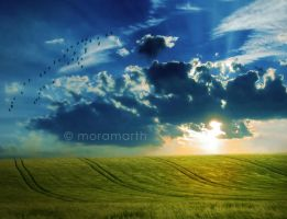 the meadow by Moramarth