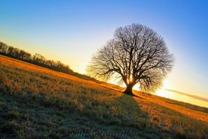 my favorite tree the summer linde by MT-Photografien