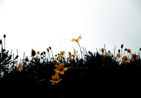 yellow by Kimberley-Taylor