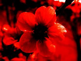 the red flower by photofreak07