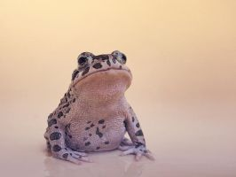 Frog 1 by mary-petroff