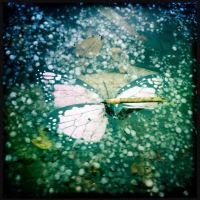 Hail and Butterflies by elizabethunseelie