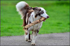 Save the stick by Tiefenschaerfe