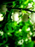 Lily of the Valley by Steppenwulfe