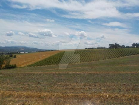 Rural Umbria 1 by Kevin-Welch