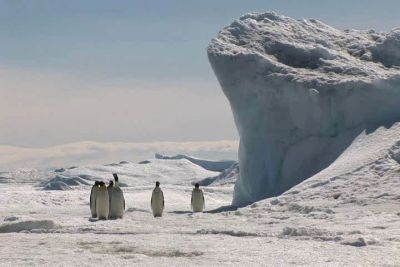 Emperor Penguins in Antarctica by MadHatterVVVI