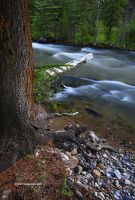 Details Along a Creek updated by TRBPhotographyLLC
