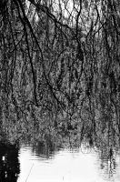 Weeping 2 (Mono) by johnwaymont