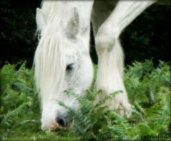 The  Magical White Horse by Estruda