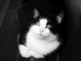 cat in black and white by NikitaLaChance
