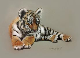 Tiger Cub - Colored Pencils Drawing by JasminaSusak