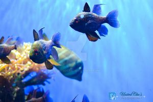 Aquatic Life at London Zoo by unitedcba