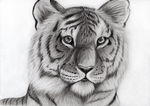 Just a Tiger by Takas15
