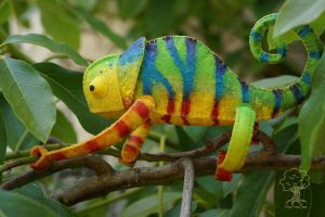Custom Painted Chameleon 11 by quirkandbramble