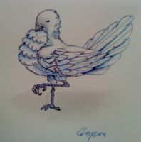 Dove by Chequer