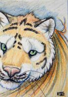 ACEO: Crayon Tigeress by cloudstar-wolf