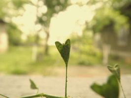 green love by AnaPengu