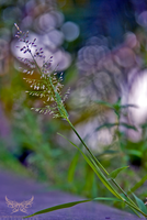 Toning the BOKEH by lee-sutil