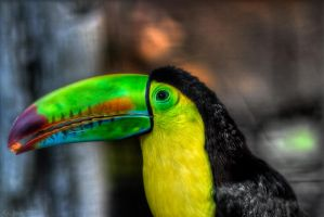 Tucan HDR by KrisSimon