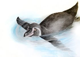 Humboldt penguin by annaKuad